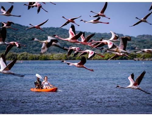 Beyond Lockdown: Lingering in iSimangaliso and Kosi Bay